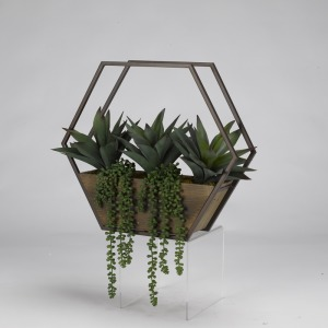 Aloe Plants & String of Pearls in Wood/Metal Wall Sconce