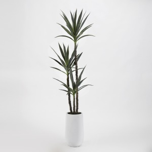 6′ Yucca Tree in Tall Round White Resin Planter