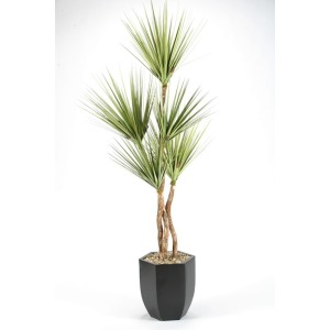 8\' Onion grass tree in hexagon metal planter
