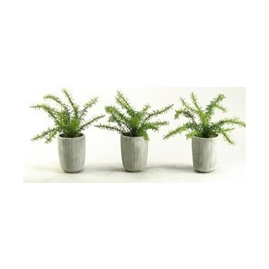 Rosemary Bush in Concrete Pot – Set of 3