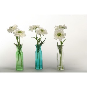 White scabiosa in colored glass vase - set of 3