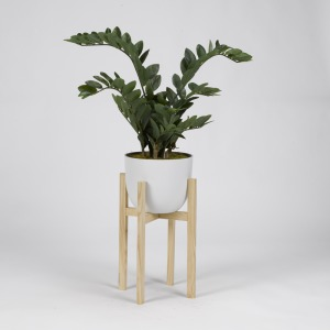 Zamifolia Plant in White Planter w/Wood Stand