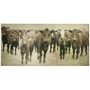 Bovine Canvas Art - Cow Photography w/ Gold Lead
