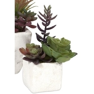 Wolek Potted Succulents - Small