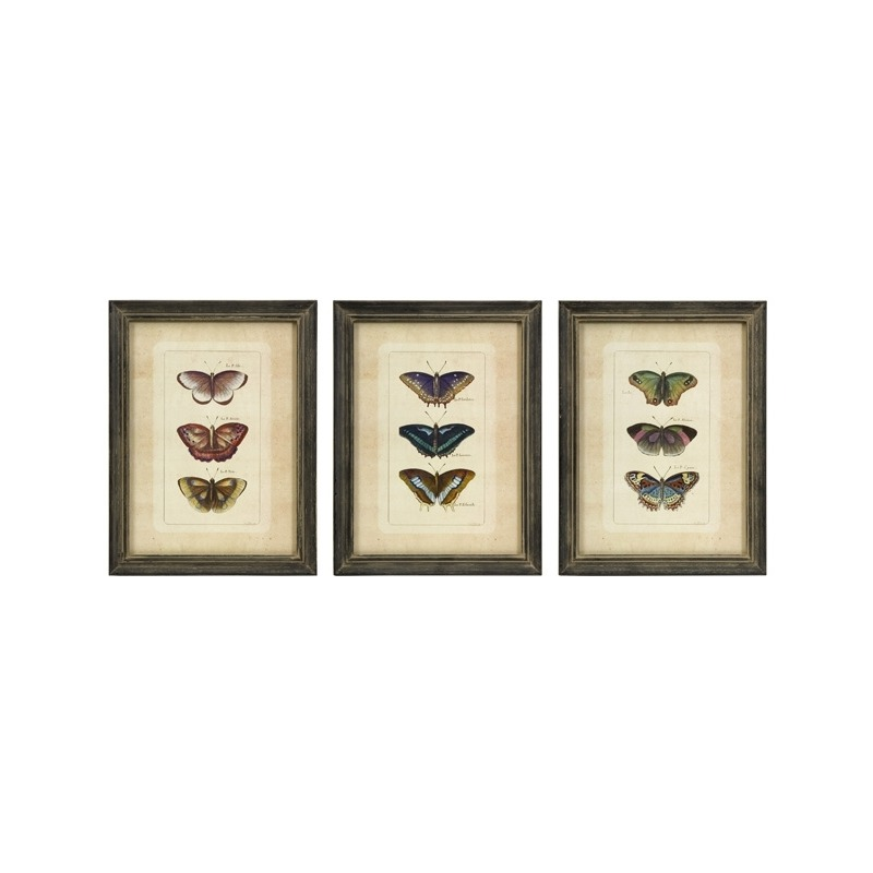 Butterfly Collection Wall Art - Set of 3