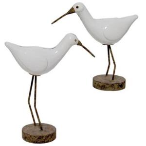Kiwi Birds S/2