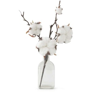 """13"""" Large Cotton Pod & Stem in Glass"""