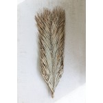 Natural Bundle of Date Palm Leaves