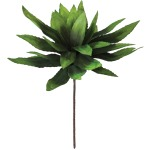 Botanica #294