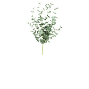 Botanica #984