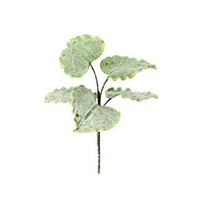Botanica #657