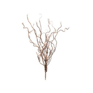Botanica #599