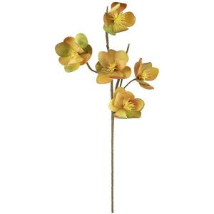 Botanica #2426