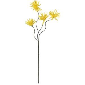 Botanica #638