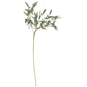 Botanica #963