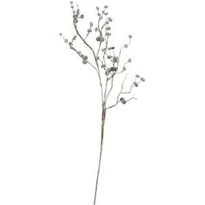 Botanica #922
