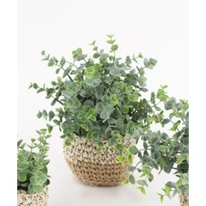Artificial Eucalyptus Plant in Woven Pot - Large
