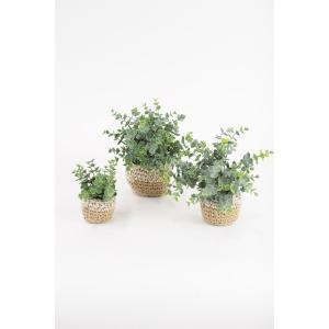 Artificial Eucalyptus Plants in Woven Pots - Set of 3