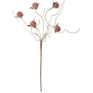 Botanica #281