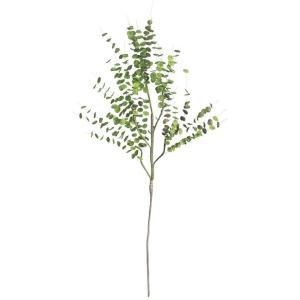 Botanica #850