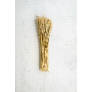 Bundle of Natural Wheat Stems