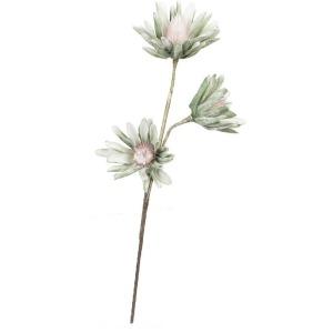 Botanica #923