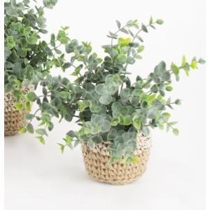 Artificial Eucalyptus Plant in Woven Pot - Medium