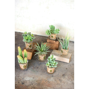 Artificial Succulents in Glass Containers - Set of 3