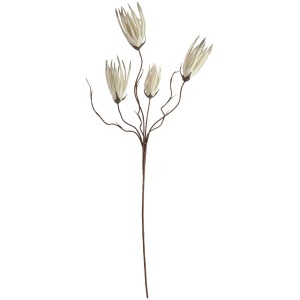 Botanica #502