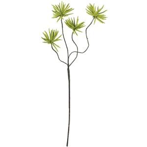 Botanica #639