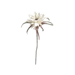 Botanica Bloom #2157