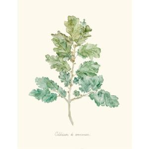Herb Garden VI