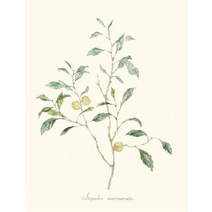 Herb Garden IV