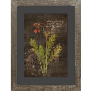 Aroma VII - Glass Frame