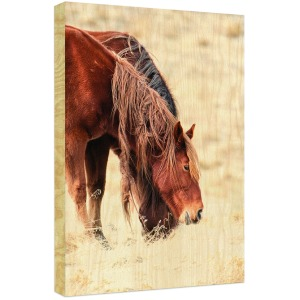 Mane Story Birch Wood Box Art