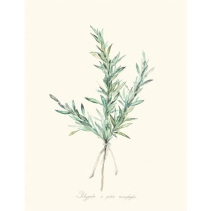 Herb Garden II