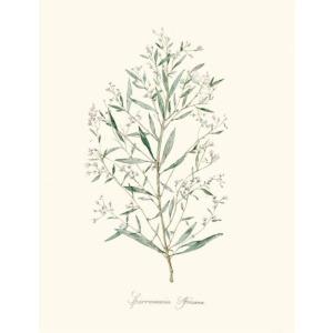 Herb Garden III