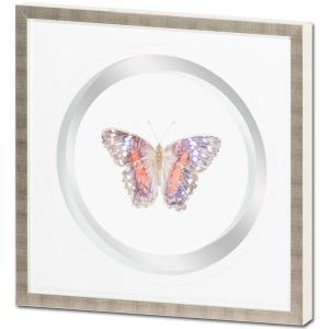 Butterfly Varietal C