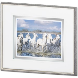 White Horses of the Camargue