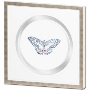 Butterfly Varietal D