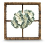 Broach Coral Shadow Box