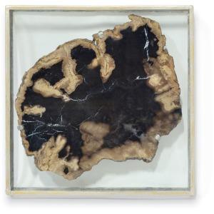 Framed Petrified Wood Slice Wall Decor, Large