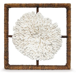 Plato Coral Shadow Box