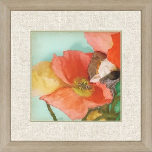 Aquatic Poppies I Gicle