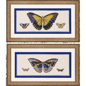 Bleu Papillion I Pk/2