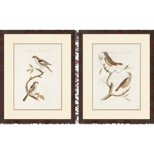 Nozeman Birds I Pk/2 Gicle