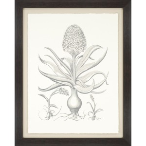 Hyacinthus Exclusive Gicle