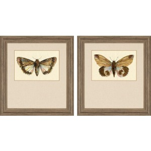 Beautiful Wings Pk/2 Exclusive Gicle