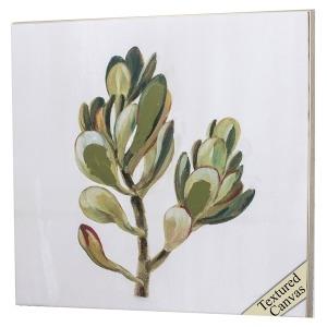 Succulents II