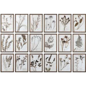 Botany - Set of 6